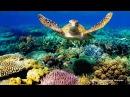 Подводный Мир Атлантического Океана. Азорские острова. Документальный фильм.