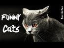 Смешные Коты 2017 ДО СЛЕЗ Приколы с Котами Кошками