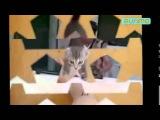 Угарные, сумасшедшие и умные животные выкладываются на полную! 2  Czy animals! (Fun) 2.
