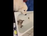 мам, она заняла мою ванну