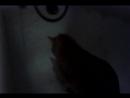 Мой котэ играется с водой :3