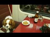Вот такие пассажиры обычно едут в вагоне-ресторане из Тюмени) #Точнее #кадрдня