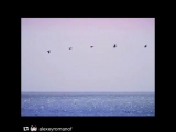 Instagram post by Ольга Орлова  Jun 16, 2017