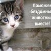 """Приют """"Зоозащита-плюс"""" Серпухов"""
