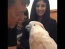 Поцелуй попугая или как попугай боится щекотки gjwtkeq gjgeufz bkb rfr gjgeufq jbncz otrjnrb Вот это ВИДЕО 33 15