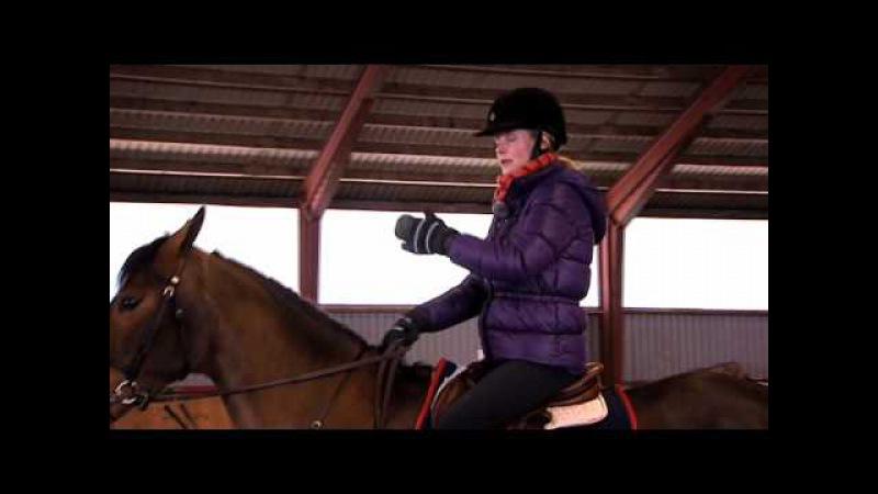 Träning Lydnad, Rytm och Galopp - We Love Horses
