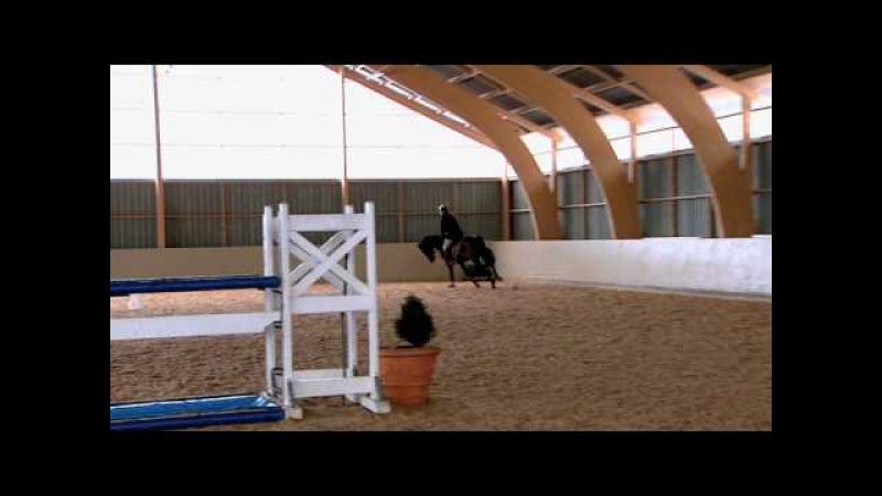 Träning Snett hinderhopp - We Love Horses