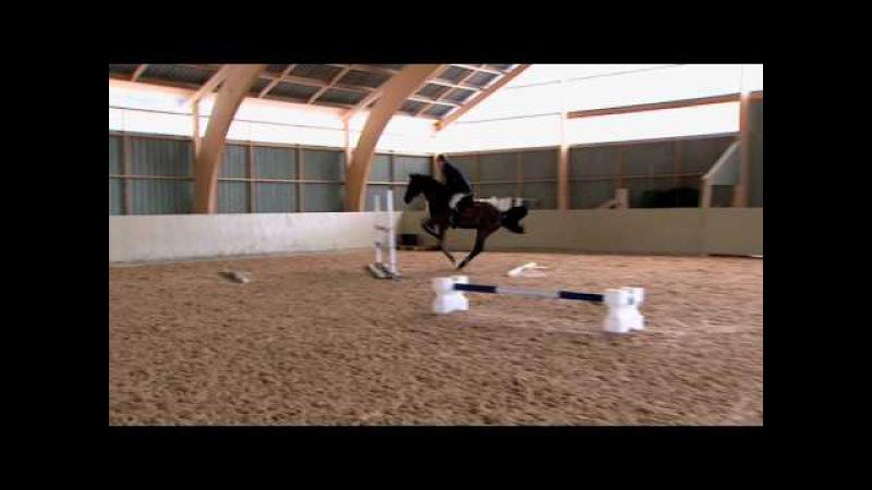 Träning Hoppa med volt - We Love Horses