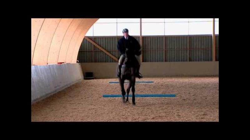 Träning Rakriktning och hålla rytmen 12 - We Love Horses