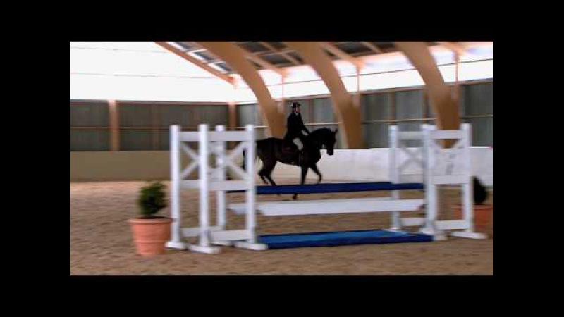Träning Rakriktning och hålla rytmen 22 - We Love Horses