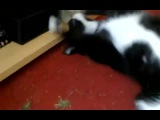 Cat loves weed