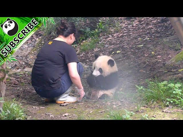 Panda asks nanny to bath her