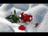 Роза На Снегу, Лучшие #Песни о Любви,  Агурбаш Анжелика