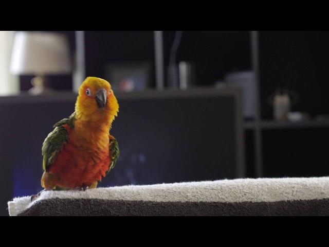 Jendaya bird dance MJ.THRILLER