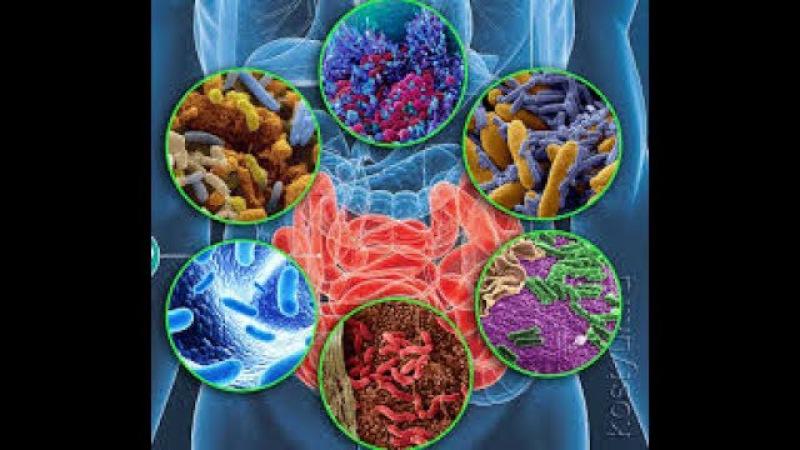 Тонкости голодания. Часть III. Микробиом человека