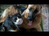 Мои ЗАБАВНЫЕ животные ╰❥ОТВАЖНЫЙ кот 😊 ПРИКОЛЫ с котами и собаками 😊 Fun with ...