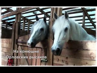 На конюшне ОРЛОВСКИХ РЫСАКОВ   Парк Сокольники   Sokolniki Park  