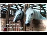 На конюшне ОРЛОВСКИХ РЫСАКОВ | Парк Сокольники | Sokolniki Park |