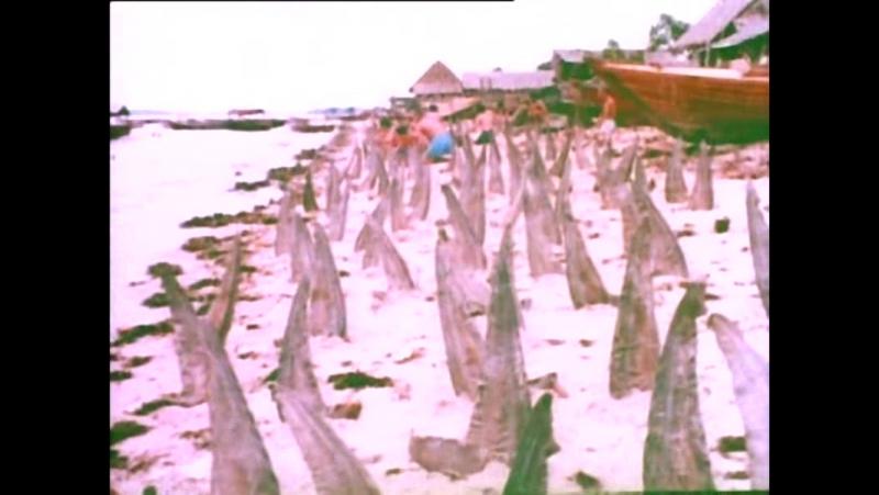 Шокирующая Азия, акулий промысел и расплата за него на Филлипинах