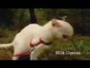 Подборка приколов про котов Ржака до слёз смотреть всем! online-video-cutter