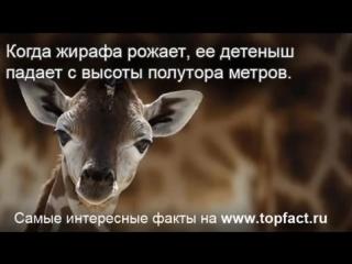 Самые интересные факты о животных на TopFact.ru