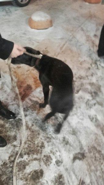 В 20:00 видели собаку у Макси, Псковская 2. Мы сняли с него белый тряп