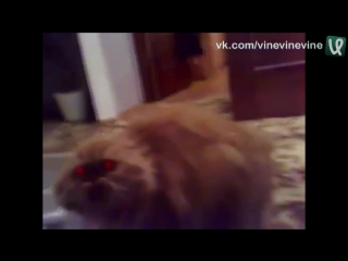 В кота вселился демон