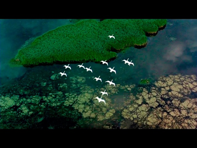 К.Никольский - Птицы Белые Мои (HD720p)
