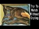 Emotional and Inspiring Skeleton Dog Rescue!