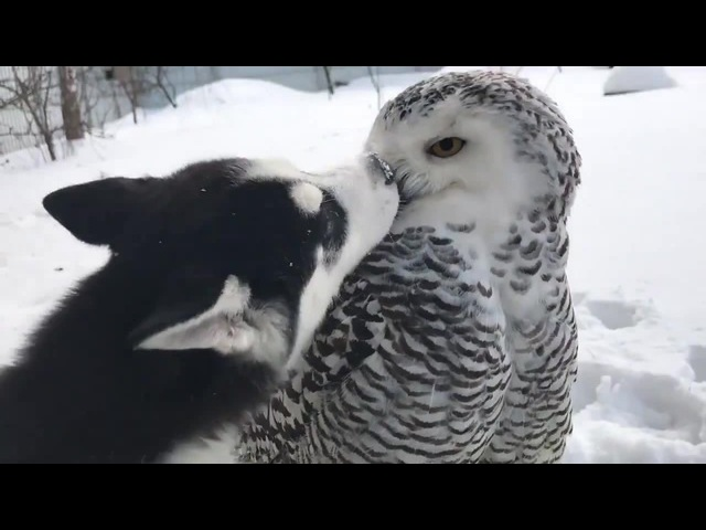 Love is owl you need