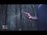 Mad World - Gary Jules (Manic Focus Remix) #coub, #коуб