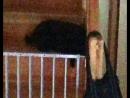 когда просидел запертым на лестнице всё время пока остальные смотрели Музыкальный блог Доктора Ужасного
