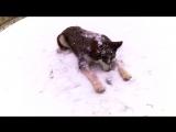 Первый снег для Харлея)