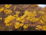 18. Autumn Leaves - Natasha Marsh. РСРРРРёР№ РРёССРРРР