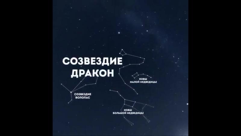Тополь Светлана