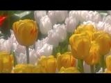 Весна пришла! Оркестр Поля Мориа - Love story - Paul Mauria
