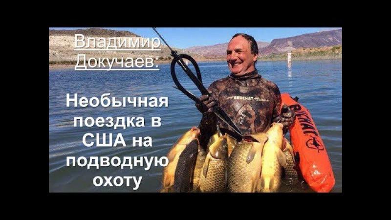 Владимир Докучаев: Необычные итоги поездки на Чемпионат Мира по подводной охот ...