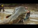 MAMMOTH CATFISH TALL 8 20 FEET VS LITTLE BOAT HD by CATFISHING WORLD