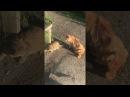 Бешеные коты / CATFIGHT