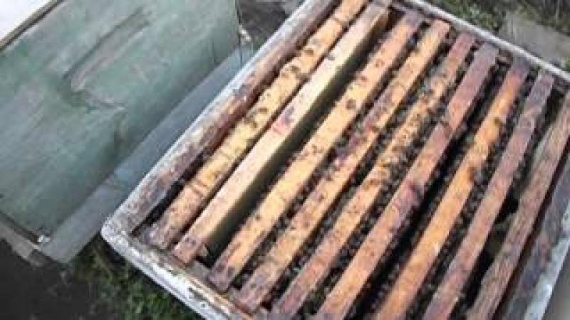 как лучше подставлять пчелам вощину, чтобы им не навредить и не спровоцировать а...