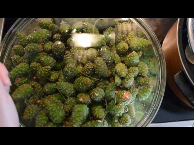 Варенье из шишек (Рецепт, Польза, Вред, Как принимать, Едят ли шишки из варенья)