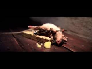 Мышь качается в мышеловке реклама сыра)