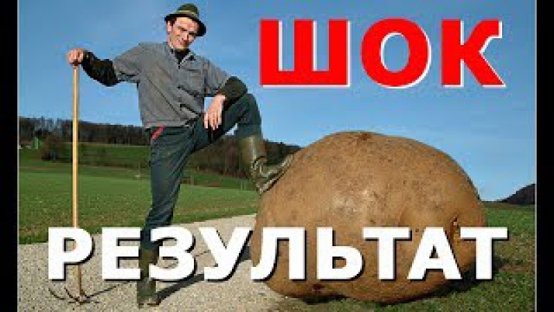 КАРТОФЕЛЬ. Посадка картофеля без лопаты. ДЛЯ ТЕХ У КОГО БОЛИТ СПИНА / Planting of potatoes