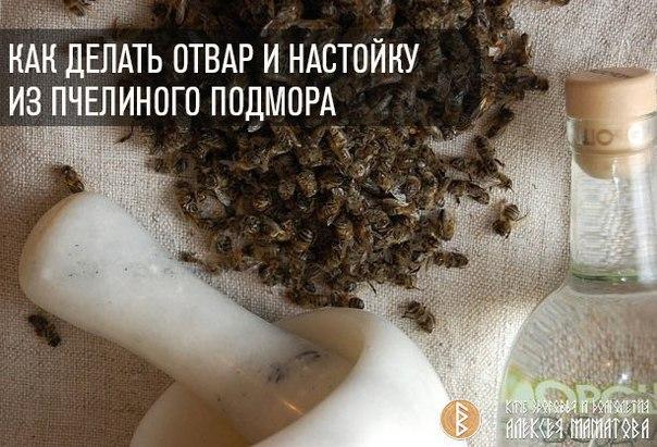 Пчелиный подмор как сделать