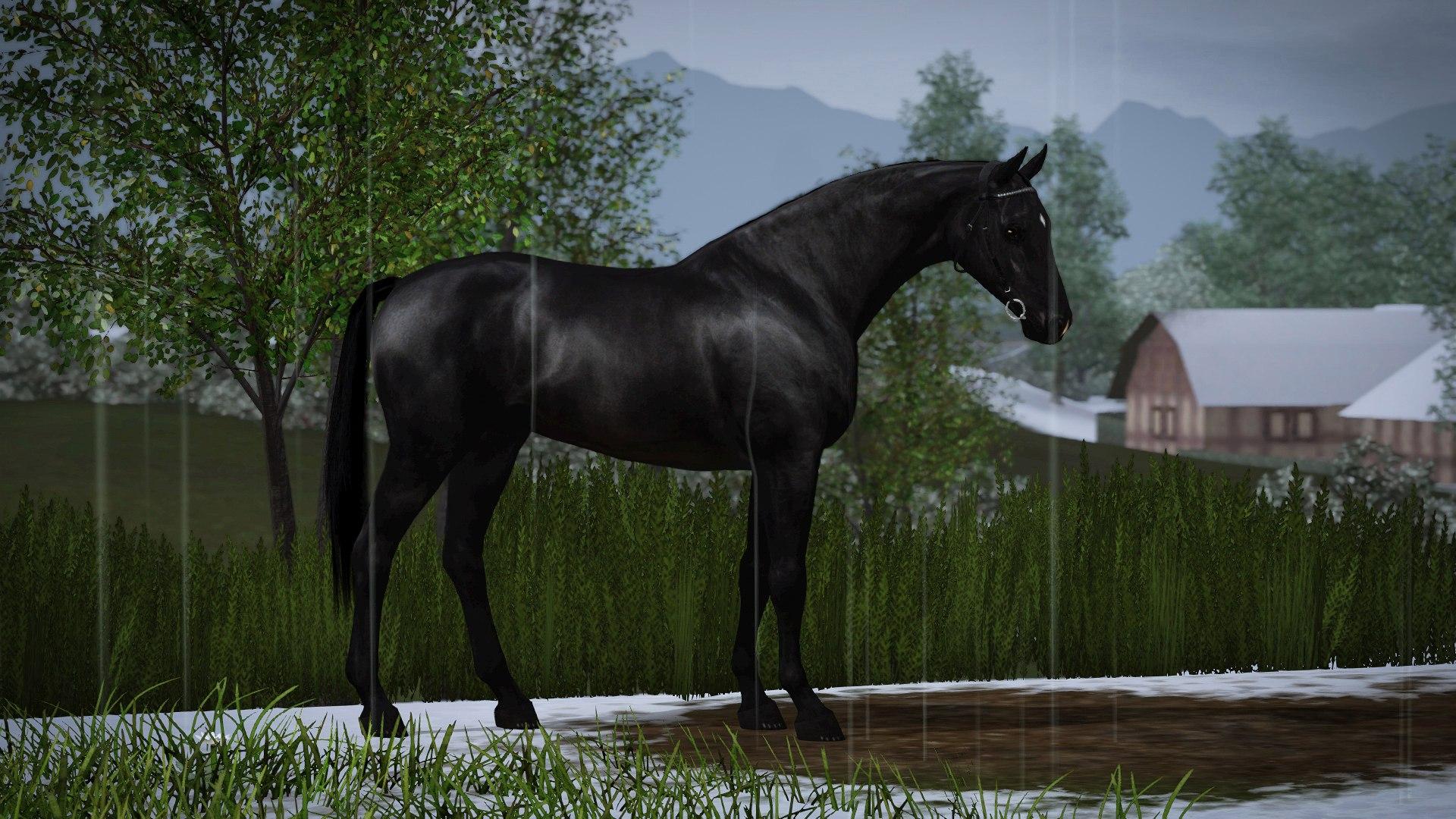 Регистрация лошадей в RHF 2 - Страница 5 GzYQn3shMGU