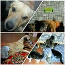 Помощь животным БУДЕННОВСК фото #19