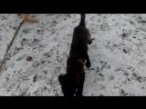 Страшный зверь Маркус и Кьяра))
