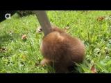 Ленивец разговаривает - 720p