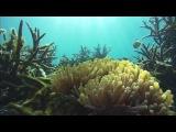 NASA to Explore Volcanoes, Coral Reefs, and Snowpacks