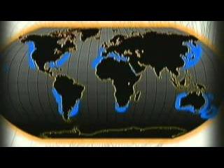 Инстинкт Хищника - Акулы (ASHPIDYTU в 2004)